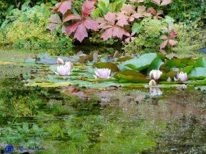Armadale Garden