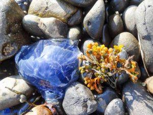 Ecosse -méduse