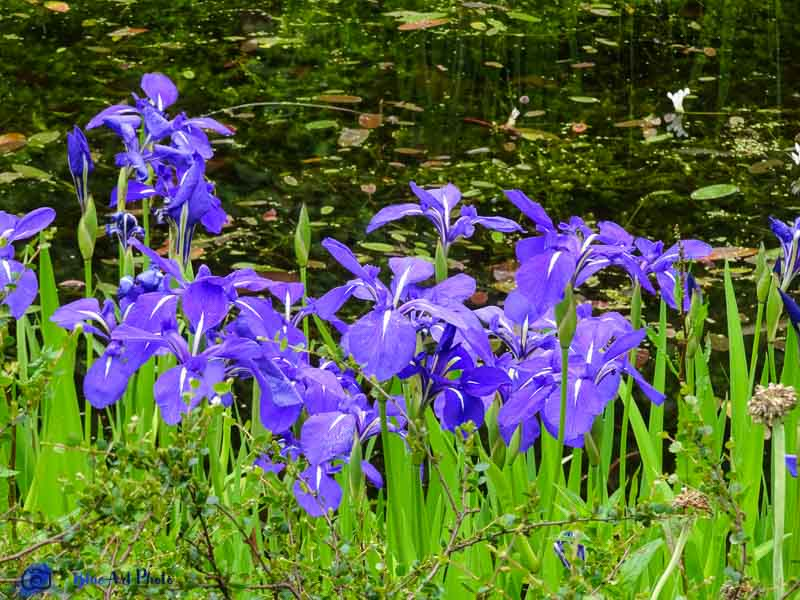 Blueartphoto page 2 sur 21 un art de vie for Aubade jardin d iris