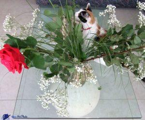 Mimi et les fleurs