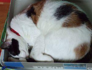 Mimi dans la boite du puzzle
