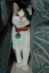 Mimi chaton