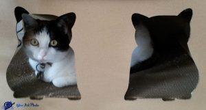 Mimi dans sa boite à chat