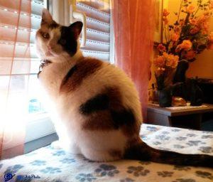 Mimi devant la fenêtre