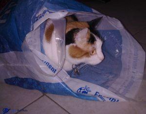 Mimi dans un sac