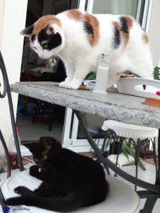 Mimi et Zora