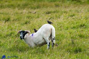 Mouton et Cie