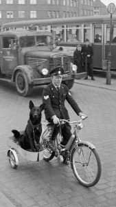 Photo ancienne -Police dogs- Source Pinterest