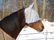 Cheval - Masque anti mouches - Source Wikipédia